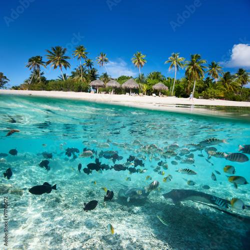 Fotobehang Koraalriffen Tropical island under and above water