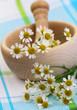 Fresh chamomile flowers, closeup