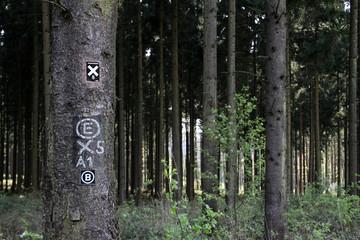 Fichtenwald mit Wegmarkierungen