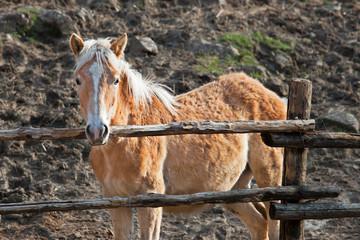 look foal