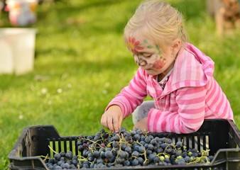 Enfant cueillant des raisins