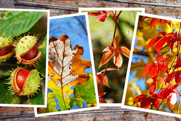 beautiful autumn images collection