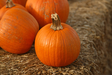 Group of pumpkins on hay at pumpkin patch
