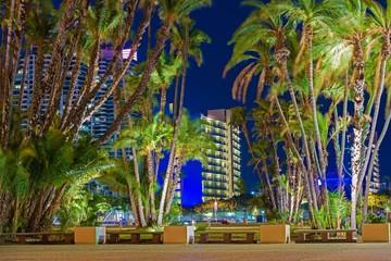 San Diego City Palm Trees