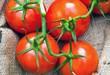 Red Organic Tomatoes