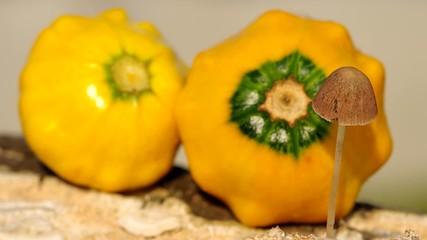 Wild mushroom and ornamental gourds
