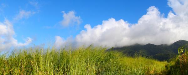 Mount Liamuiga Landscape Saint Kitts