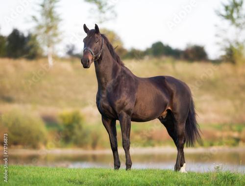 In de dag Paarden Adult Brown Horse