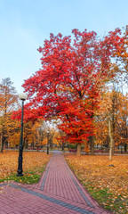 autumn city park