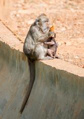 Monkey feeding her baby in national park.