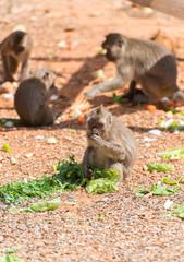 Few monkeys eating in national park.