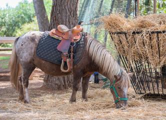 Pony eats hay in national park.