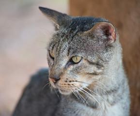 Portrait of cute street cat outdoors.