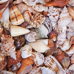 Shell selection