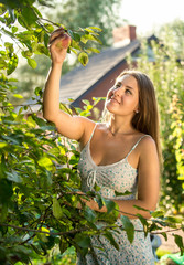 woman picking apples from trees on farm at sunny day