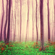 Purple light forest scene