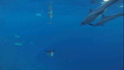 viele delfine im roten meer tauchen plötzlich schnell in die tie