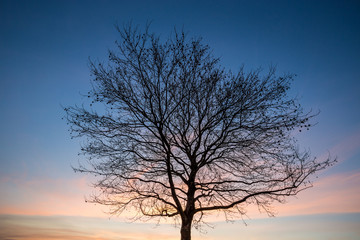 a tree with sunset sky