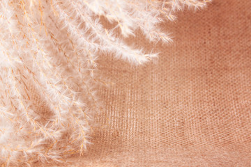 Fluffy Perennial Grass on the Burlap