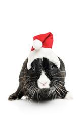 Cute Bunny with Santa Hat