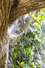 Spider Webs, La Digue, Seychelles
