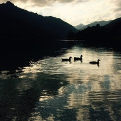 anatre sul lago