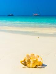 Paradise Blue Beach Pearl