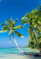 Idyllic Island Jungle Lagoon