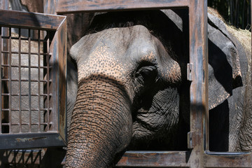Elephant caged
