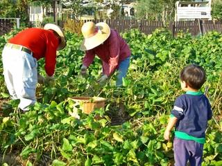 農作業の祖父母