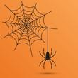 spider web - 71770483