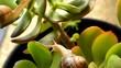 Snails Climb a Plant