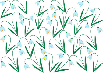 color vector snowdrop flowers on white background