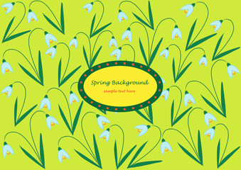 snowdrop flowers isolated on green background