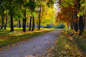 Sun shining through the trees on a path