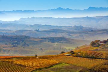 Vineyards and foggy hills in Italy.