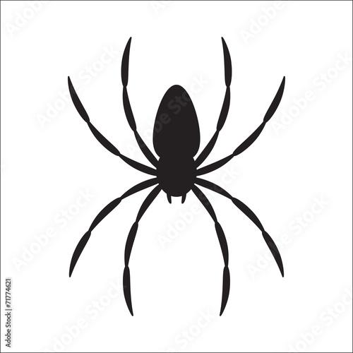 spider - 71774621
