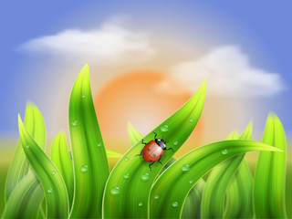 ladybug and grass on a background sunset