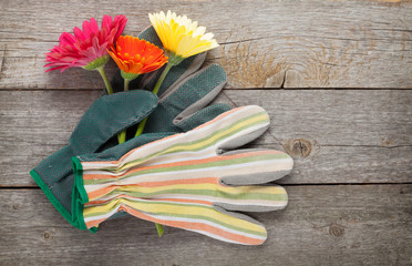 Gardening gloves and gerbera flowers