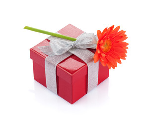 Orange gerbera flower over red gift box