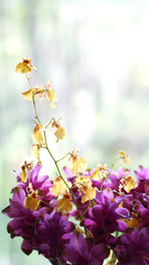 orchid yellow and purple