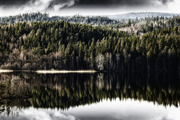 wild landscape, forest mirrored in inland lake