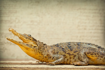 Crocodile with open mouth. Photo tinted in yellow