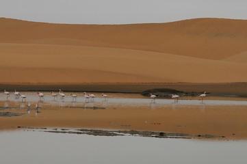 Zwergflamingos in den Wetlands von Walvisbay