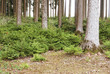 canvas print picture - natürliche Waldverjüngung