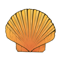 Sea Shell isolated on a white background. Color line art