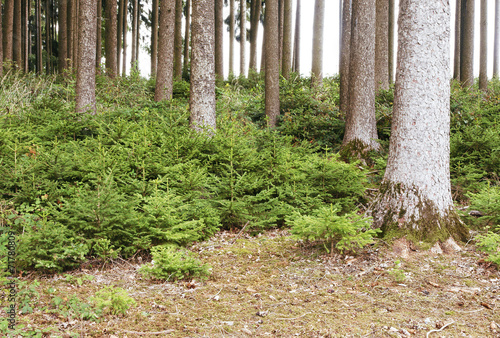 canvas print picture natürliche Waldverjüngung