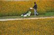 canvas print picture - Rasenmäher, Gras, Rasen, Parkanlage, Blumen, Gärtner, Gartenbau