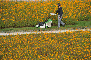 Rasenmäher, Gras, Rasen, Parkanlage, Blumen, Gärtner, Gartenbau