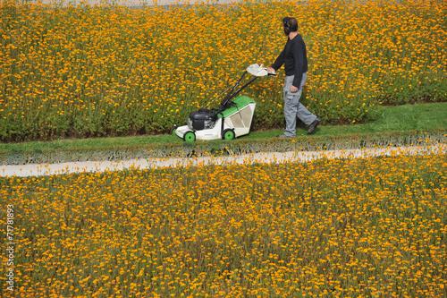 canvas print picture Rasenmäher, Gras, Rasen, Parkanlage, Blumen, Gärtner, Gartenbau